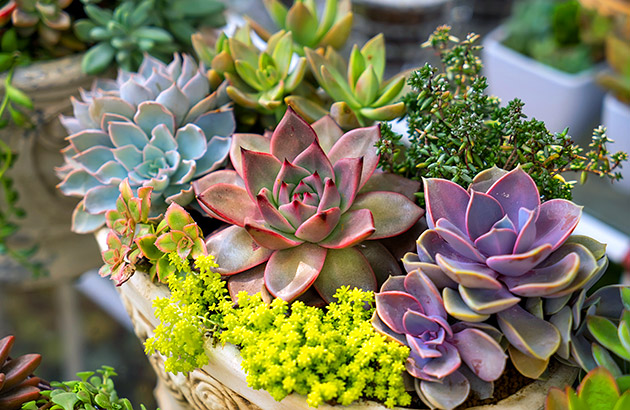 Using pastel tints from succulents  is one beautiful springtime flower pot garden idea