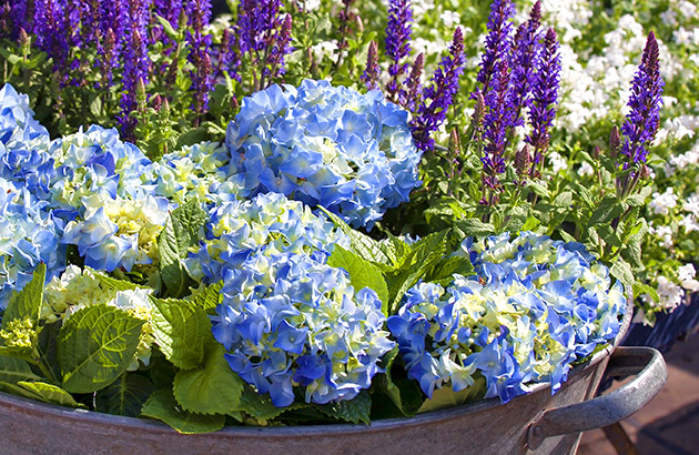 5 Beautiful Springtime Planter Garden Ideas