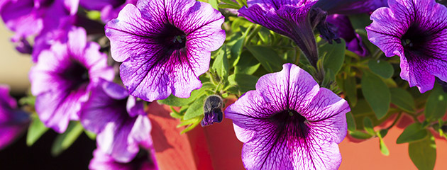 Spring Style is one beautiful springtime flower pot garden idea