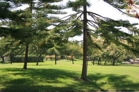 Landmarkpinetrees