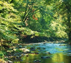 Fair Hill Nature Preserve
