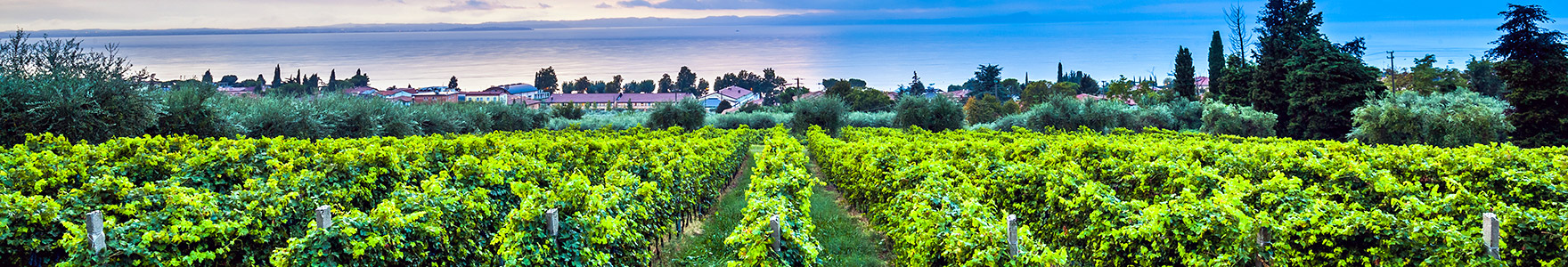 Real Estate for sale in Napa and Sonoma Valley CA