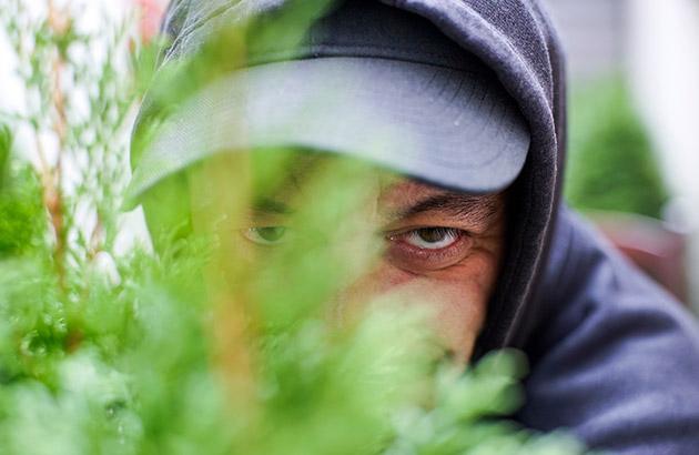 Burglar peering through the bushes