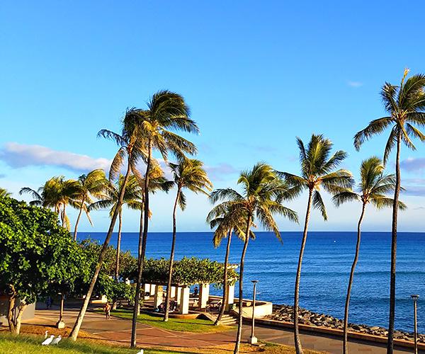 Kakaako Oahu Community Neighborhood Information