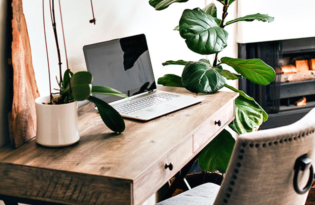 Fig lead plant next to a home office desk with laptop open