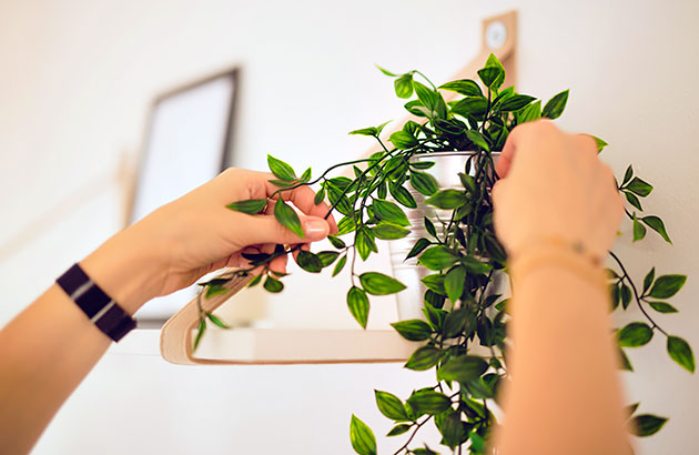 A zoomed-in image of arms adjusting a plant