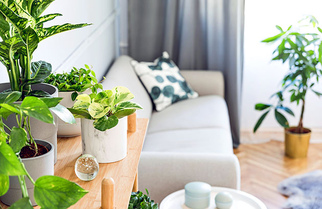 A bright living room with many green plants